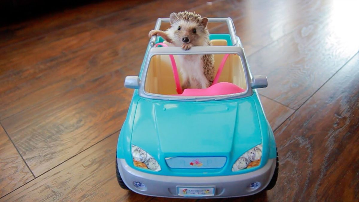 Your Life In College As Told By Hedgehogs