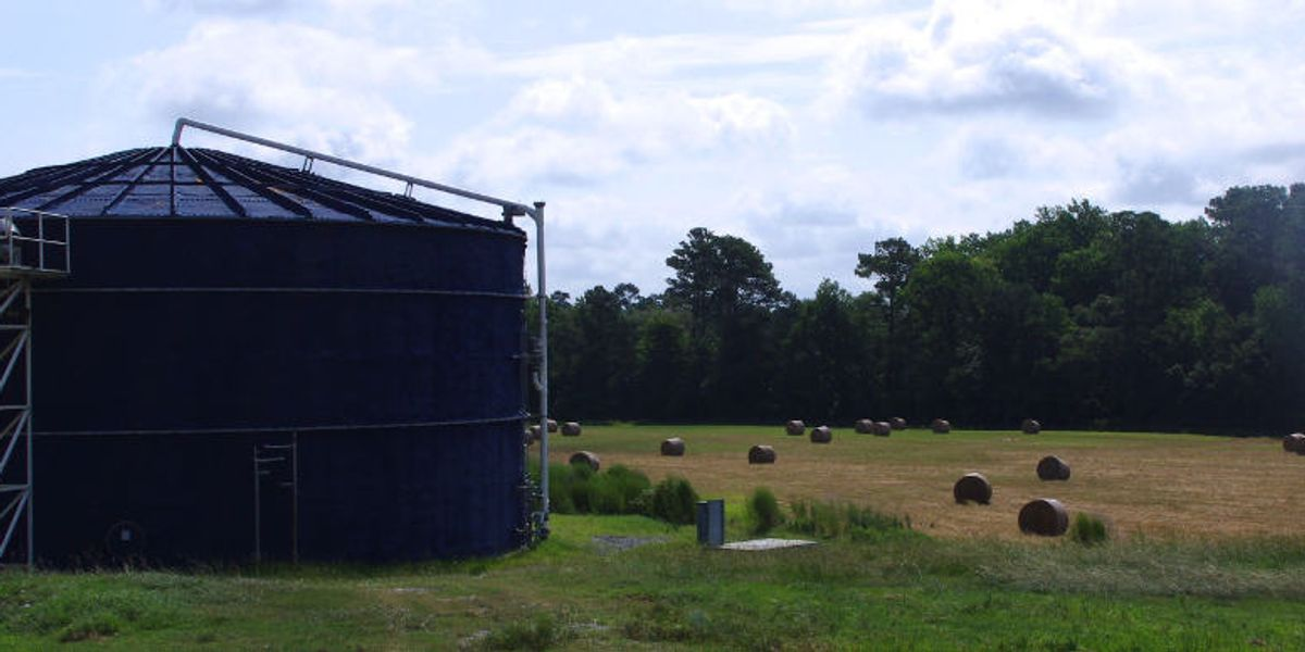 Hog waste-to-gas: Renewable energy or more hot air?