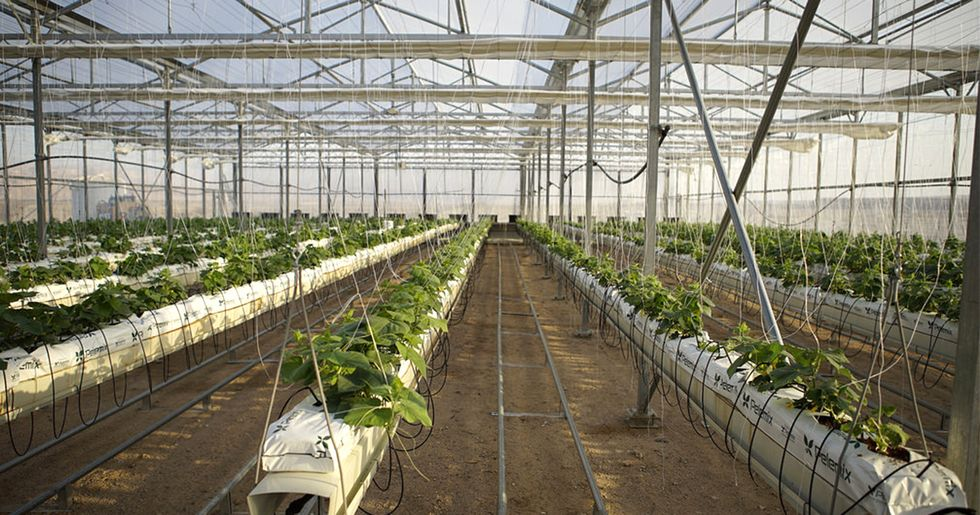 High-Tech Farming to Protect Crops Against Climate Change in Jordan