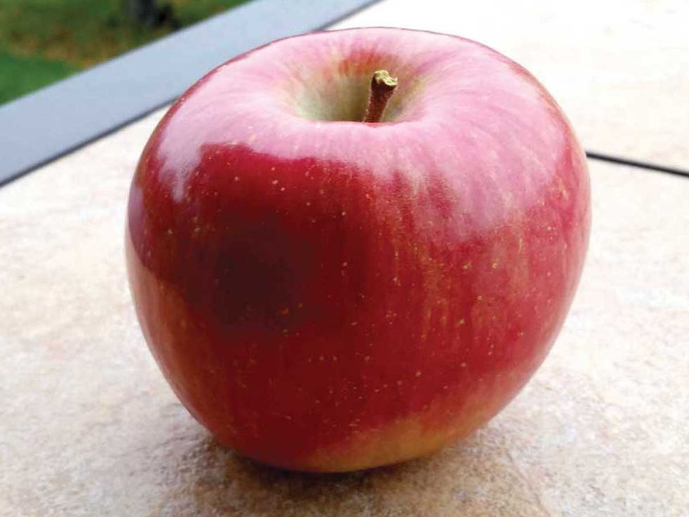 GMO Apples Arriving on U.S. Shelves for First Time