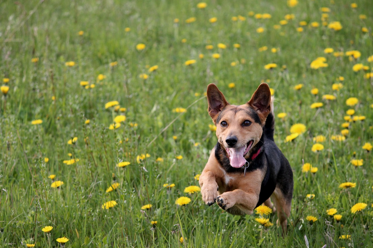 4 Great Places To Take Your Dog To In Auburn