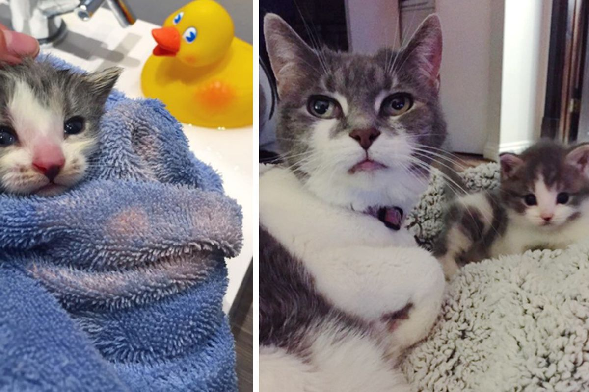 Orphaned Kitten Left in Alley Finds Grandma Cat to Love in These Beautiful Photos...