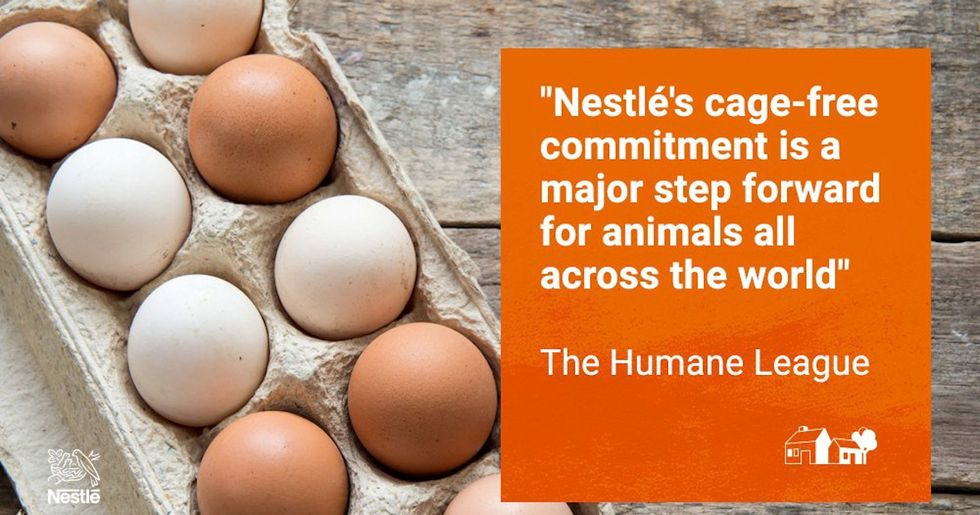 Nestlé, the World's Largest Food Company, Switching to Cage-Free Eggs