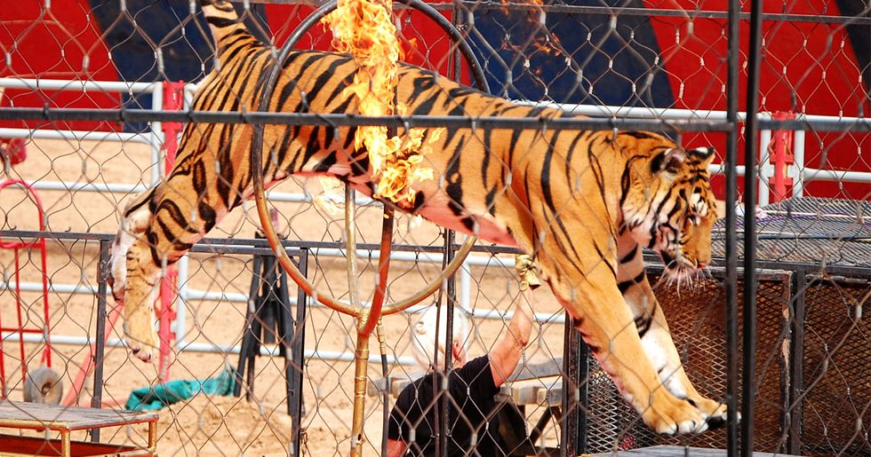 Italy Bans Use of Circus Animals