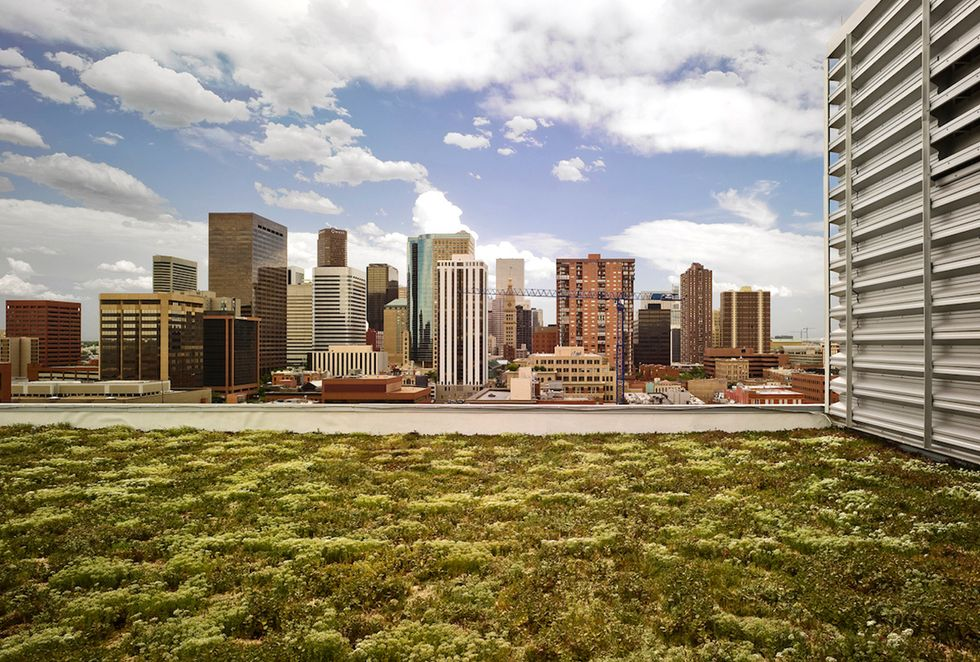 Denver Becomes Latest City to Require Green Roofs