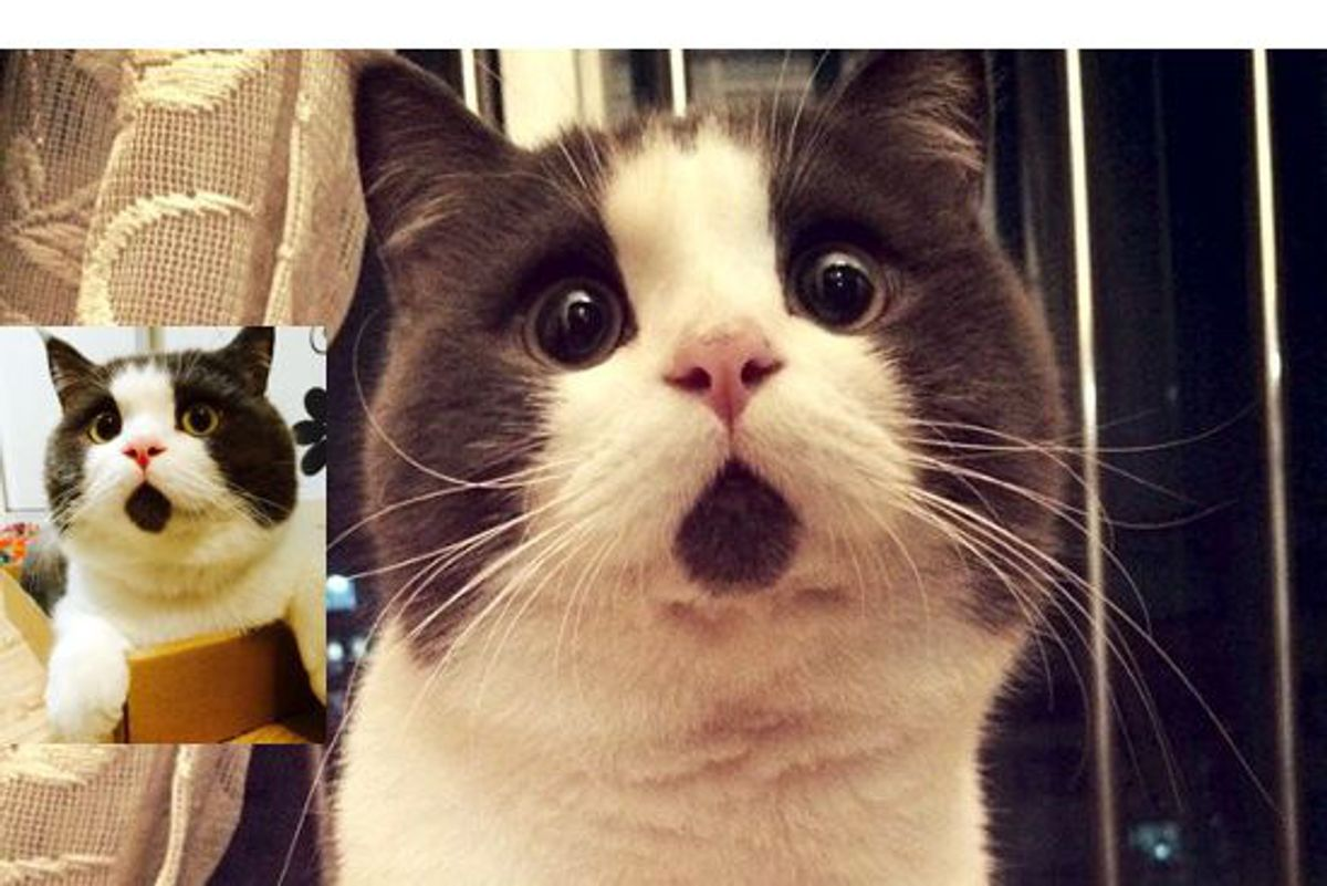 Kitty Has a Face that Looks Forever Surprised in These Cute Photos...