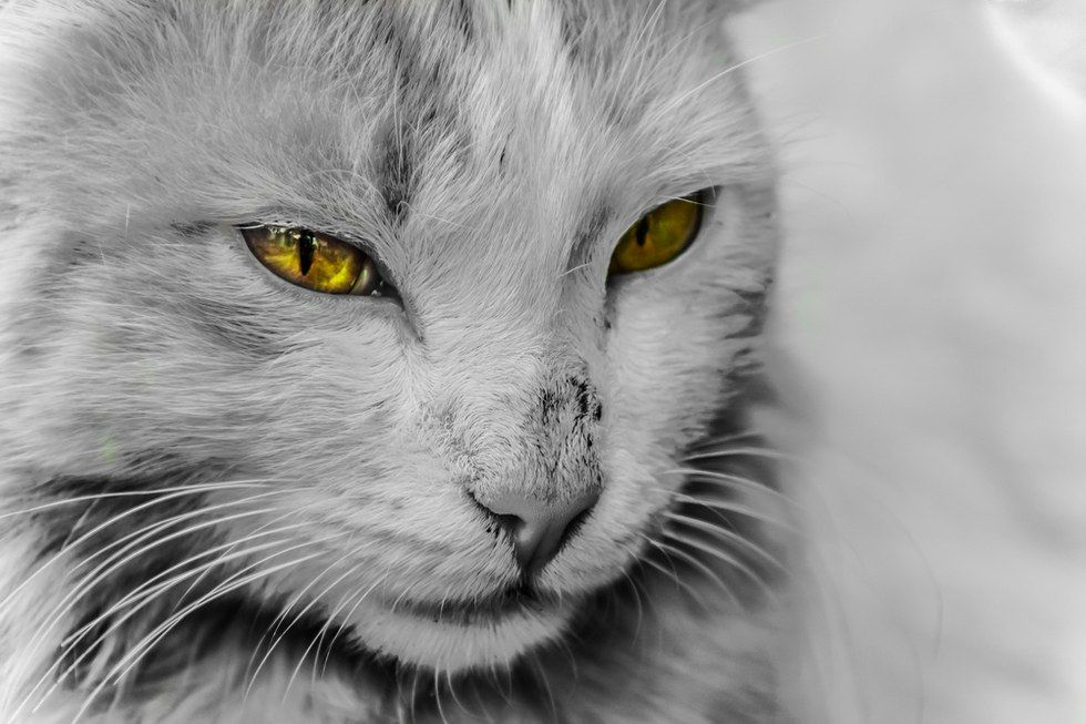 CATS – Protect You And Your Home From Ghosts And Negative