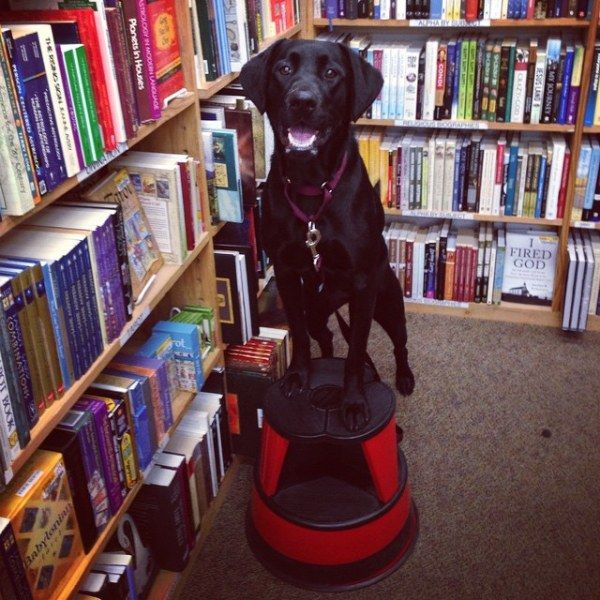10 Dog-Friendly Stores