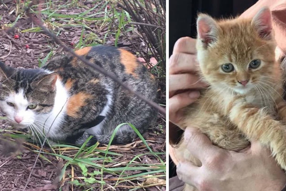 Stray Mama Cat Leads Woman to Save Her Kitten Trapped In Storm Drain...