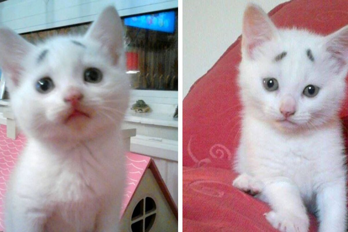 """Kitten With a Pair of """"Worrisome Eyebrows"""" Grows Up to Be a Handsome Cat!"""