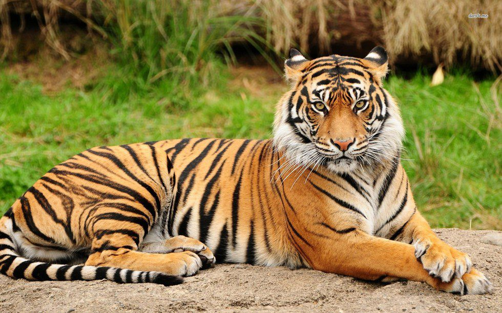 20 Of The Coolest Animal Species In The World