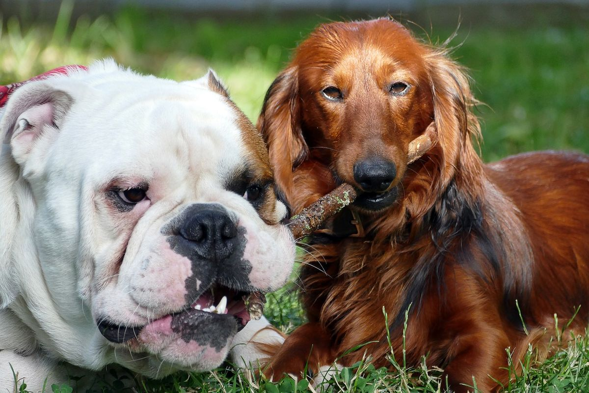 What Dog Breed You Should Adopt Based On Your Zodiac Sign