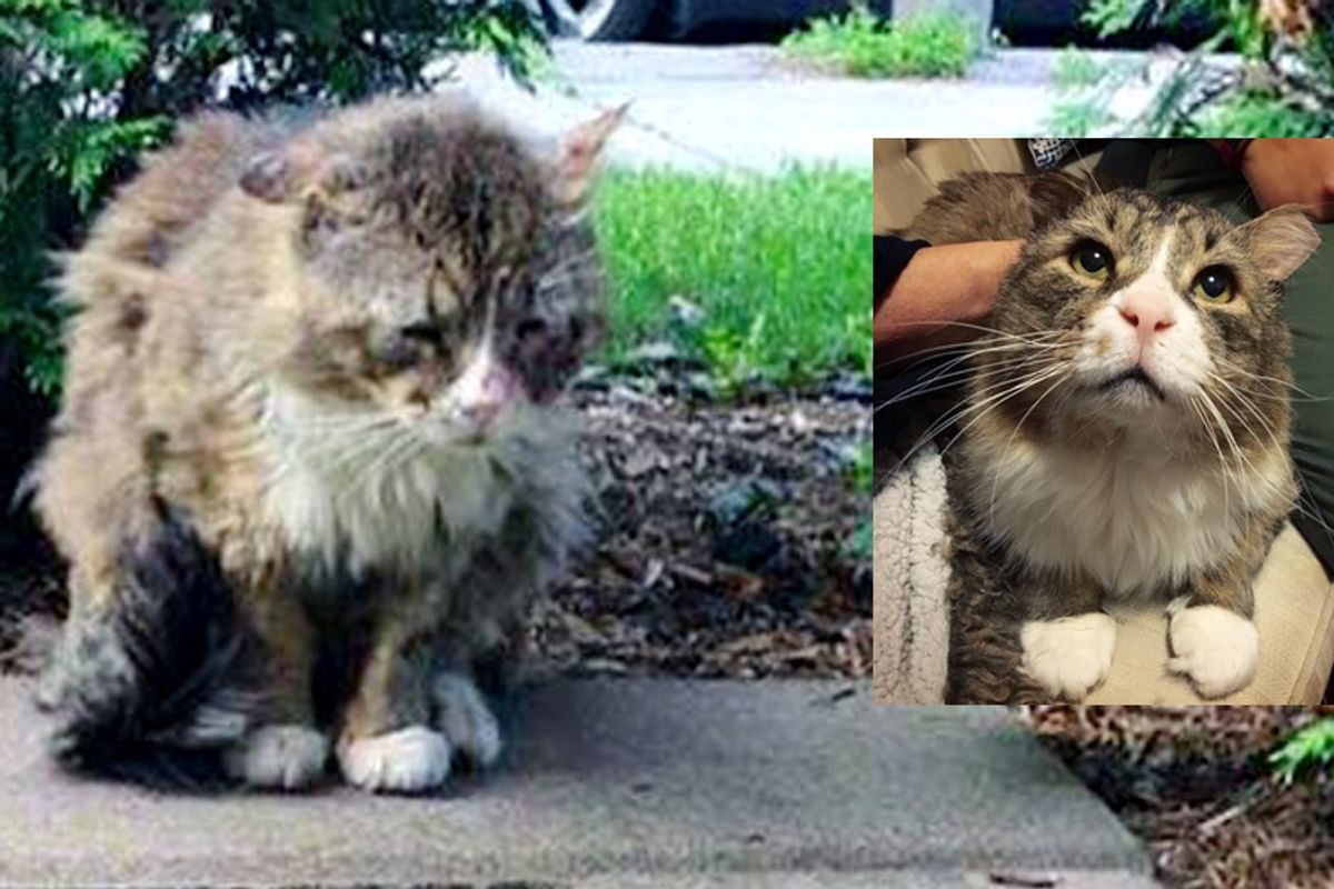 Cat Lived a Rough Life Finds Love and Gets Happiness Back into His Beautiful Eyes...