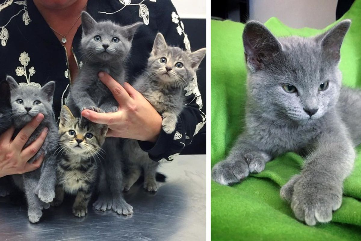 """Man Saves Kittens From Industrial Site and Surprised to See Some of Them With Giant """"Bear"""" Paws..."""