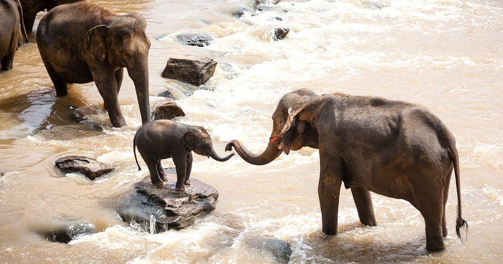 Trump's 'Hold' on Elephant Trophies May Not Be Enough
