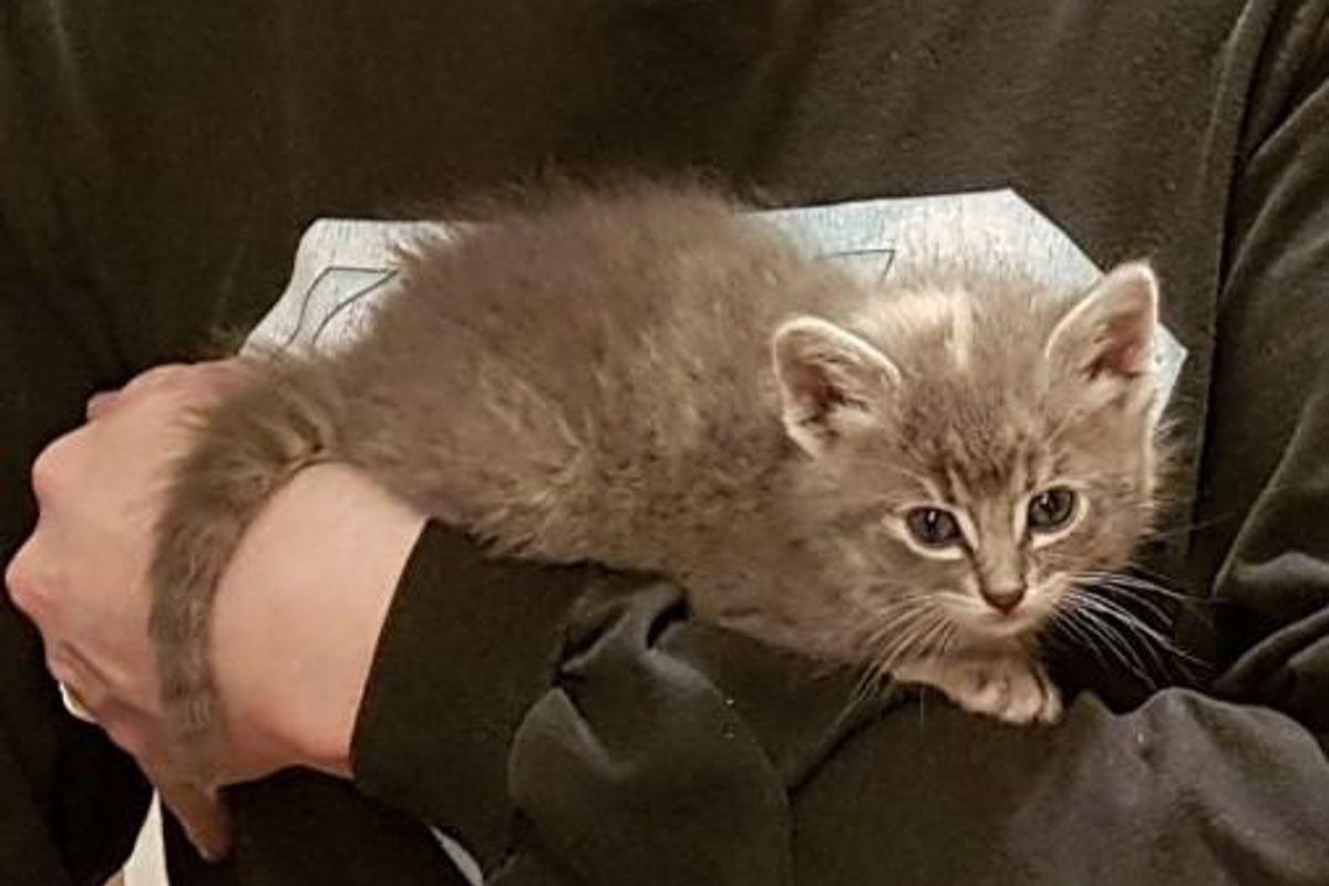 Man Hears Meowing and Finds Kitten Under Car, Trying to Attack His Shoe...