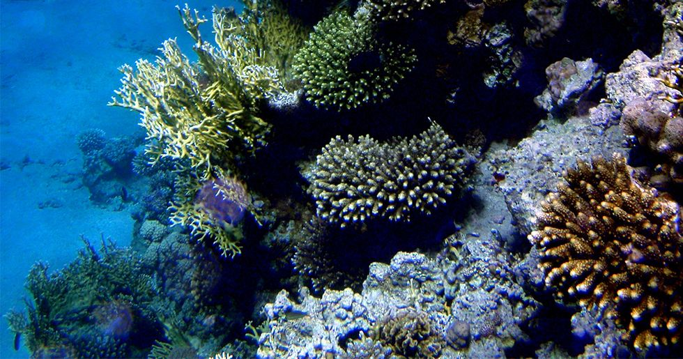 Northern Red Sea Could Be Unique Global Warming Refuge for Coral