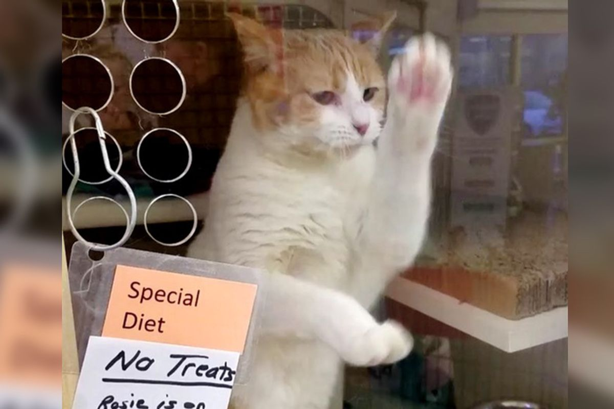 Cat Can't Wait Any More So She Takes Matters Into Her Own Paws To Get Adopted...