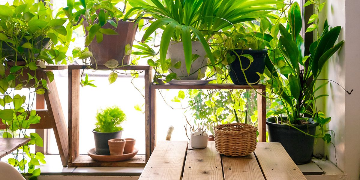 12 Houseplants That Have the Power to Heal