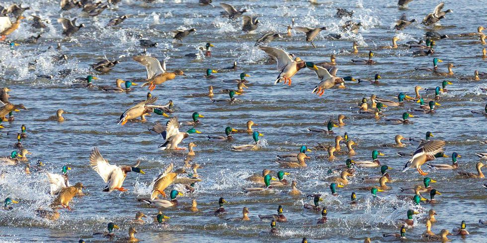 Migratory Birds Are Being Driven Northward by Climate Change