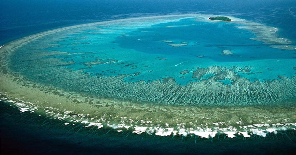 Could the Great Barrier Reef Heal Itself? New Study Offers Cautious Hope