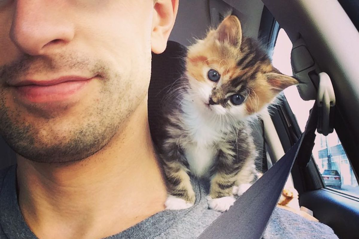 Former Marine Saves Little Calico Kitten Who Is In Need of Motherly Love...