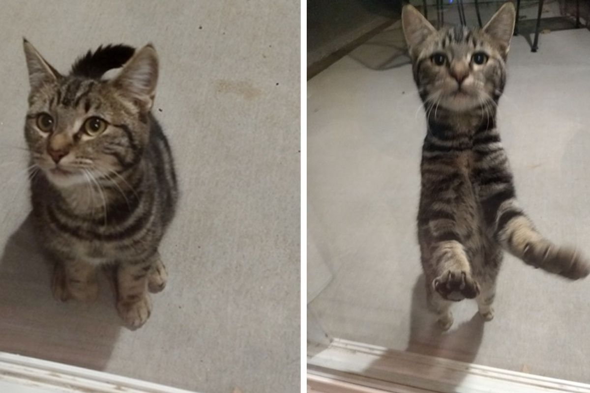 Shy Cat Comes To Family's Backyard, Nervously Trying to Get Help…