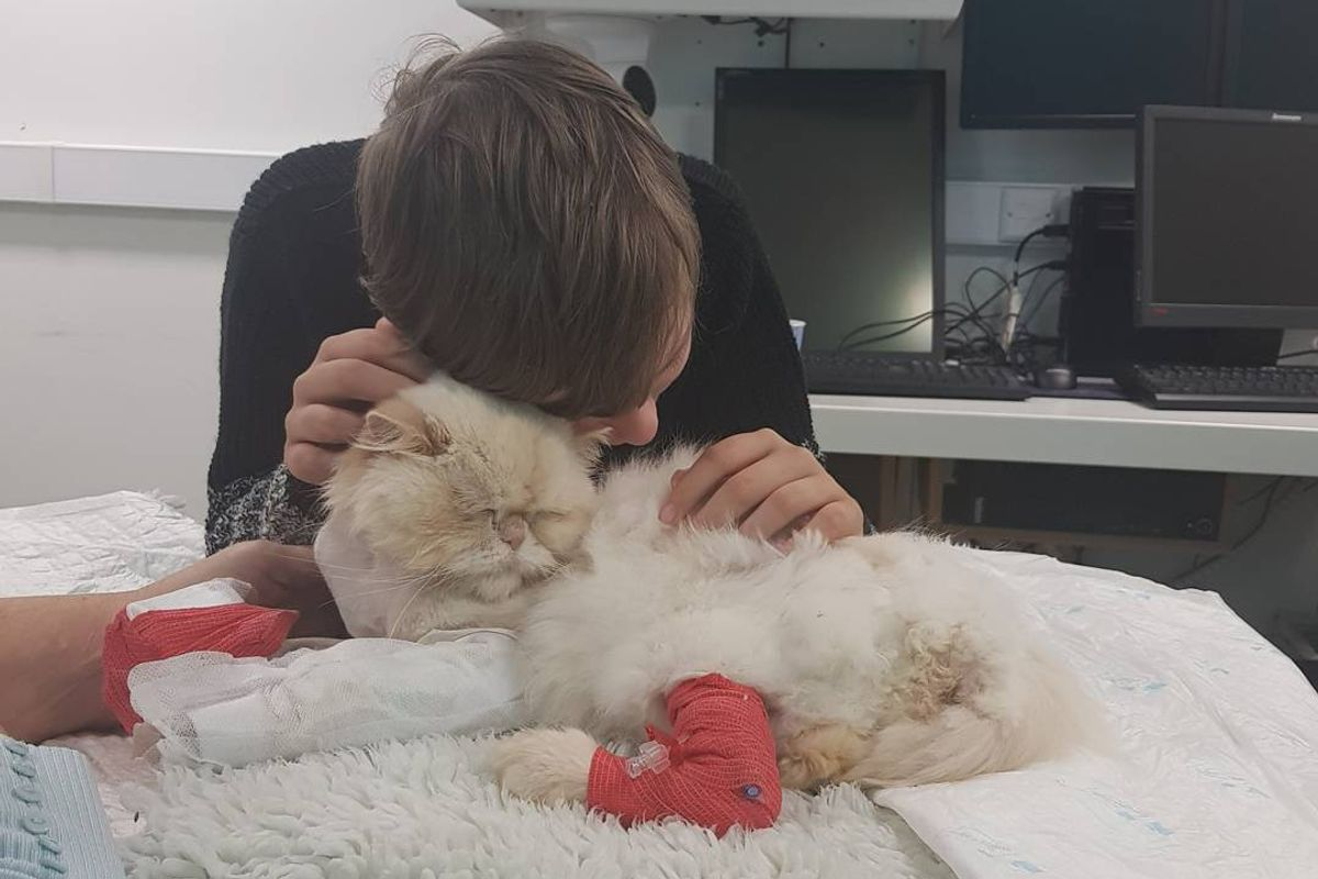 Cat Saved Boy with Autism and Now He's Trying to Save the Kitty Back...