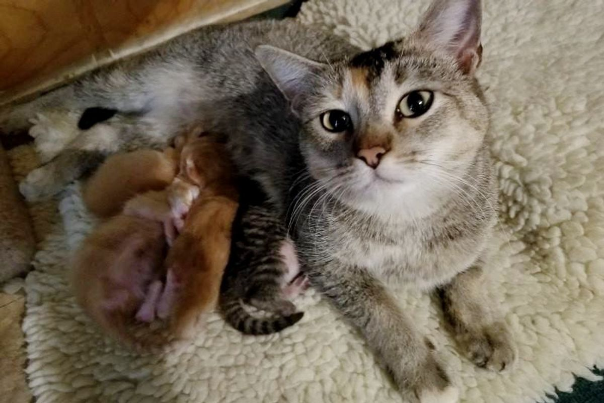 Man Comes to Work to Find Stray Cat Who Picked Their Place to Have Babies on Thanksgiving Eve