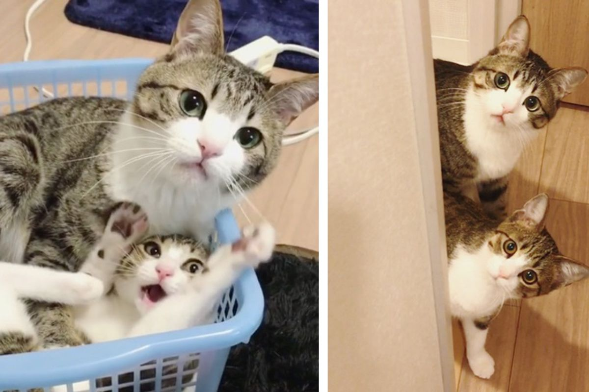 "Kitten Saved from Shelter Finds New ""Brother"" Who Looks Just like Him, He Becomes Very Attached"