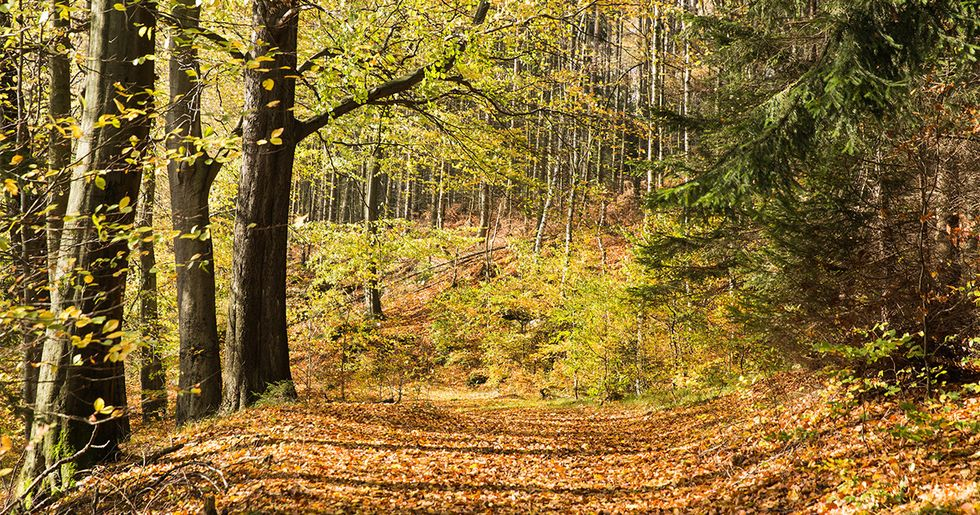 Mixed Forests Are Healthier, But Can They Survive Climate Change?