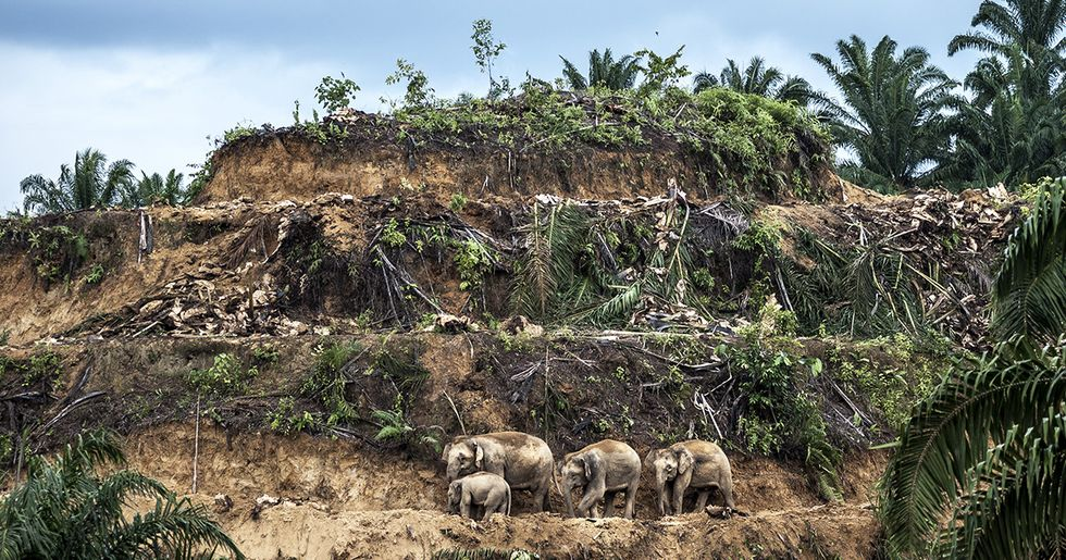 The Palm Oil Industry Promises Reform, But There's Still No Sign of Change