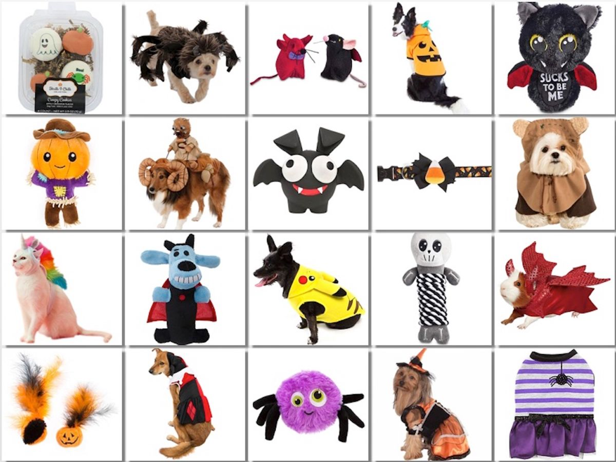 Halloween 2017: Cutest Items That You Can Buy For Your Pets