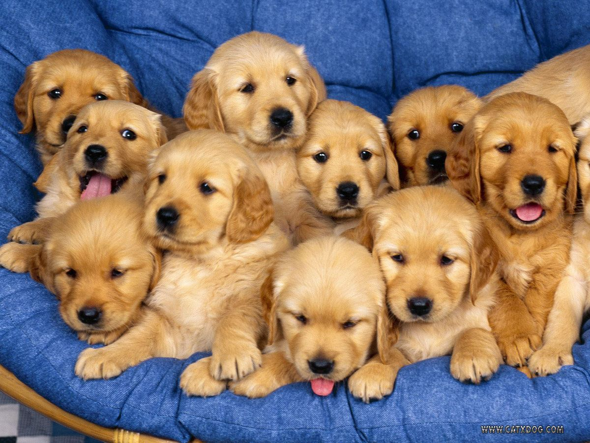 The Days Of The Week As Told By Puppy Gifs