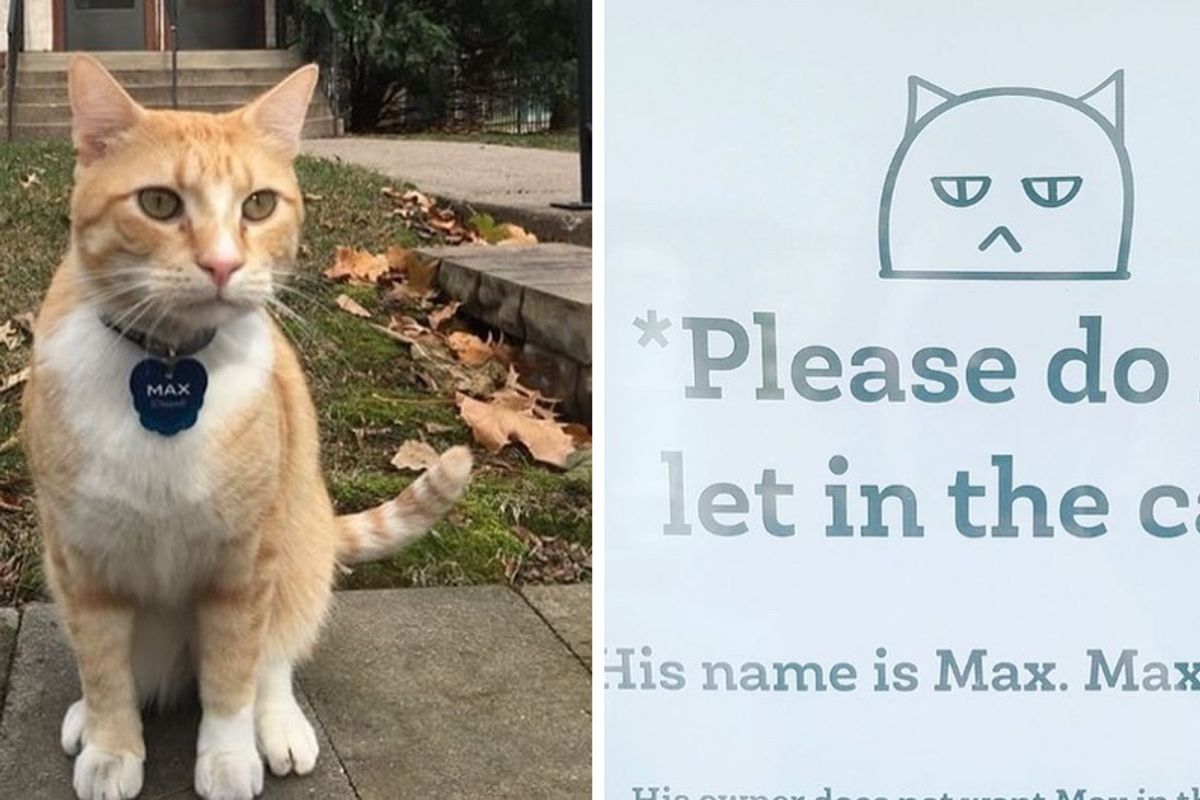 Cat Lost His Library Privileges on Campus but Gains Thousands of Supporters Over the Internet