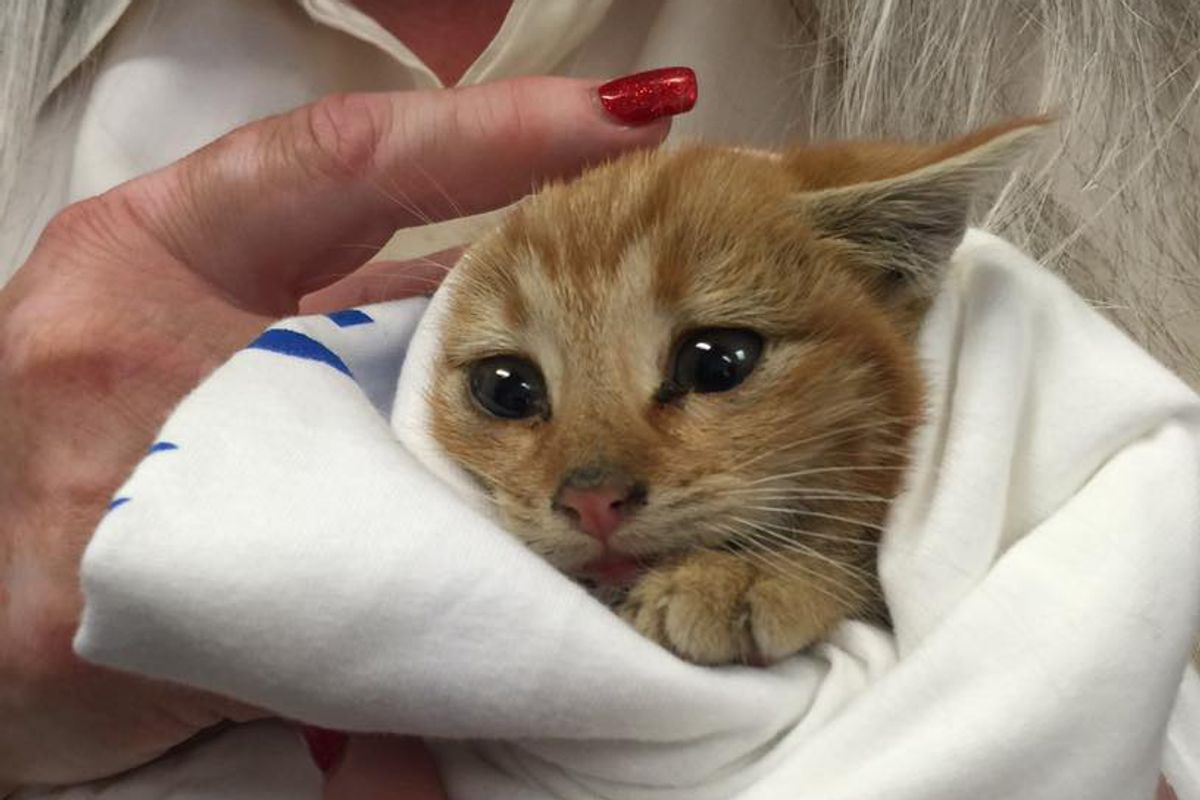 Couple Heard Tiny Chirps From Dumpster and Found Kitten Crying for Love