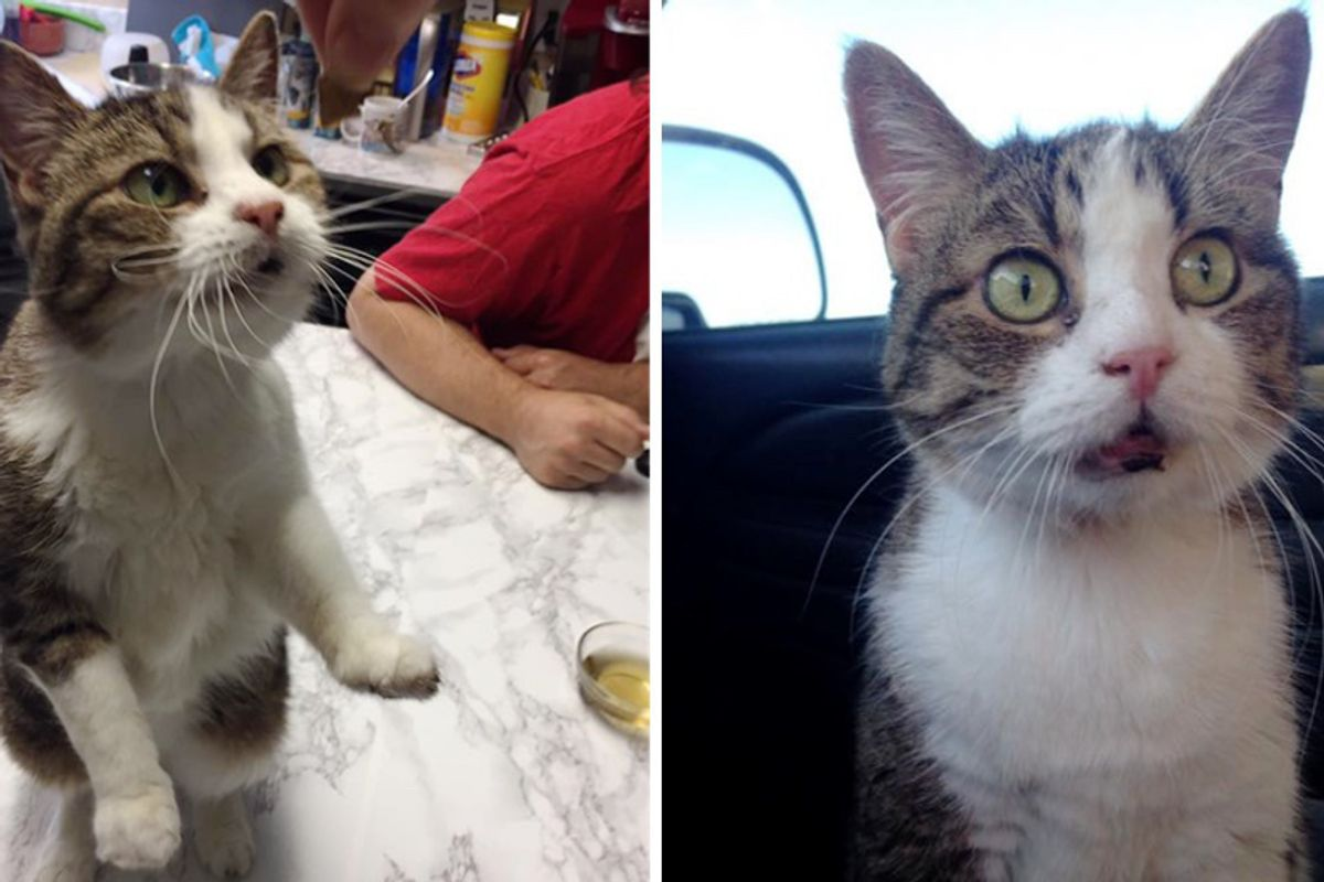 20 Year-old Cat is Epileptic, Missing Teeth With Bad Memory But She Tells Everyone How Happy She Is Every Day!