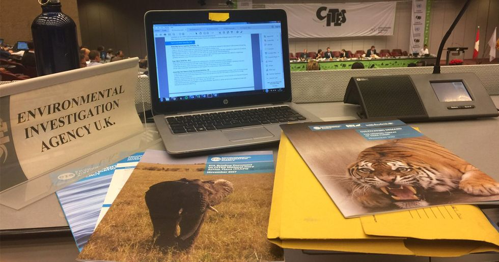 The Good, the Bad and the Endangered: Wildlife Wins and Losses at CITES Standing Committee