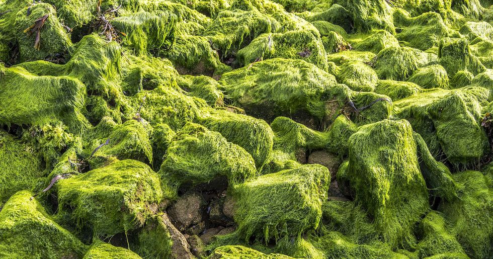 From Pond Scum to Food Bowl, Dutch Designers 3D-Print Algae Into Everyday Products