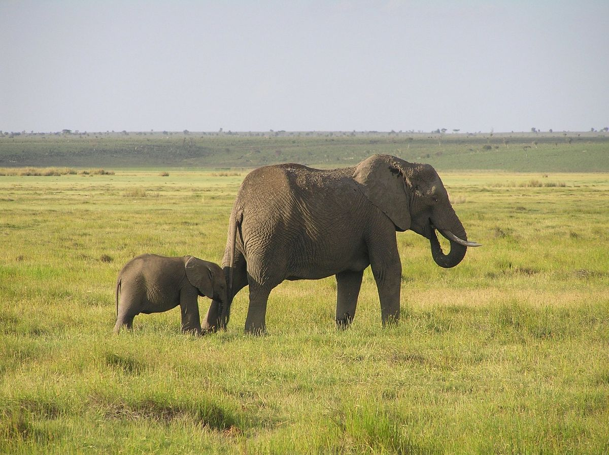 5 (And A Half) Reasons Why Elephants Rock