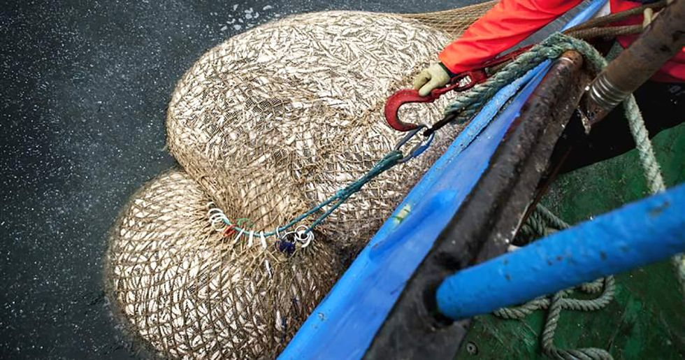10 Reasons the EU Must End Overfishing