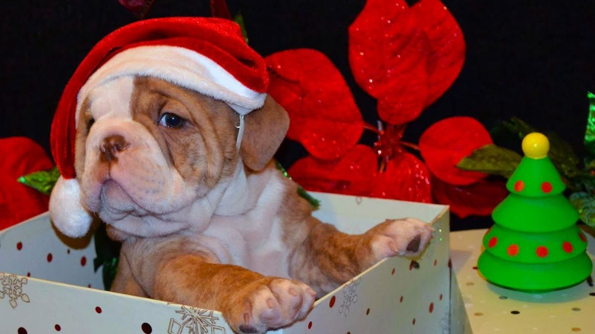 5 Things To Consider Before Giving Your Child A Pet This Christmas