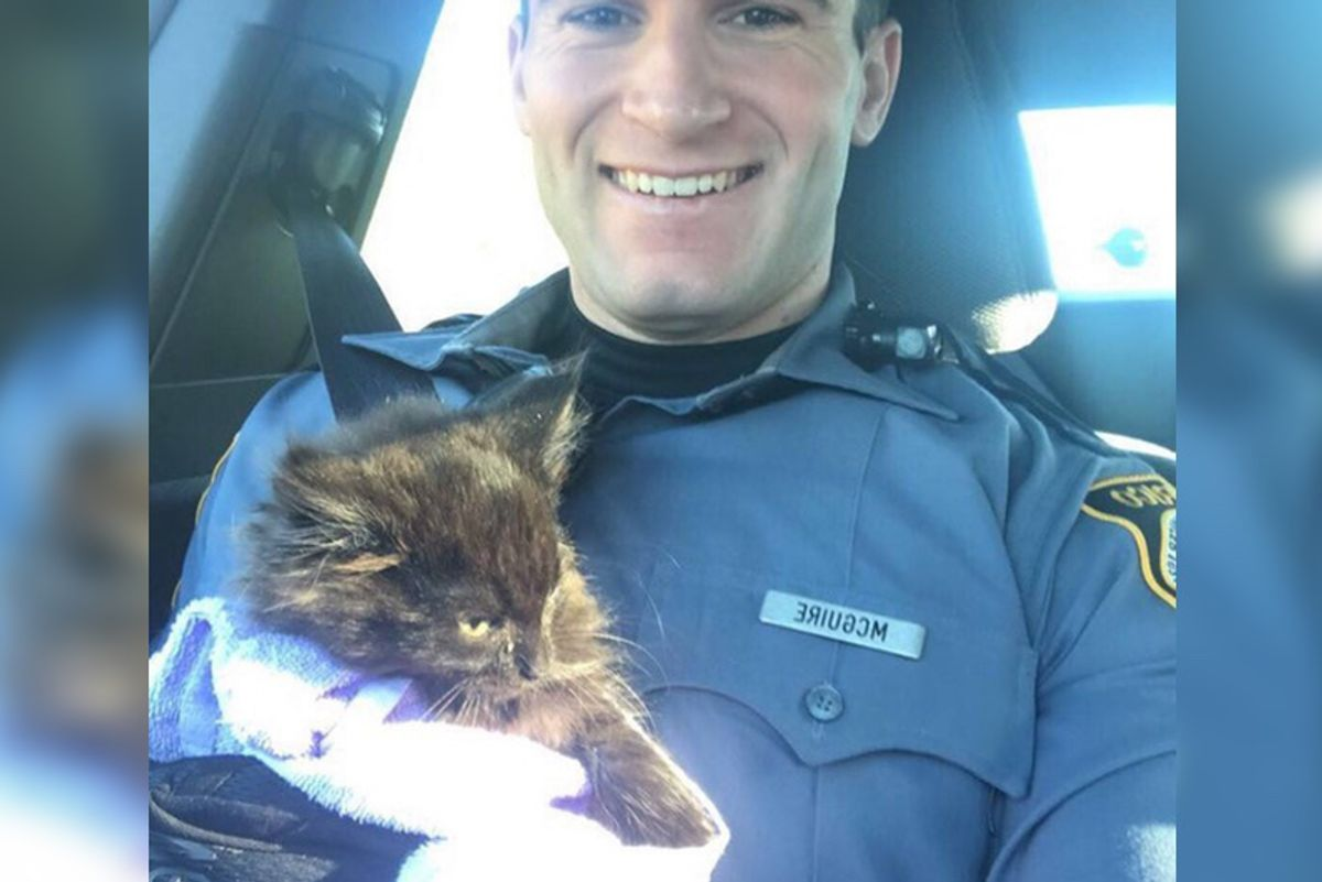 """Officer Calms Frightened Kitten With """"Kitty Voice"""" After Rescuing the Kitten From Traffic"""