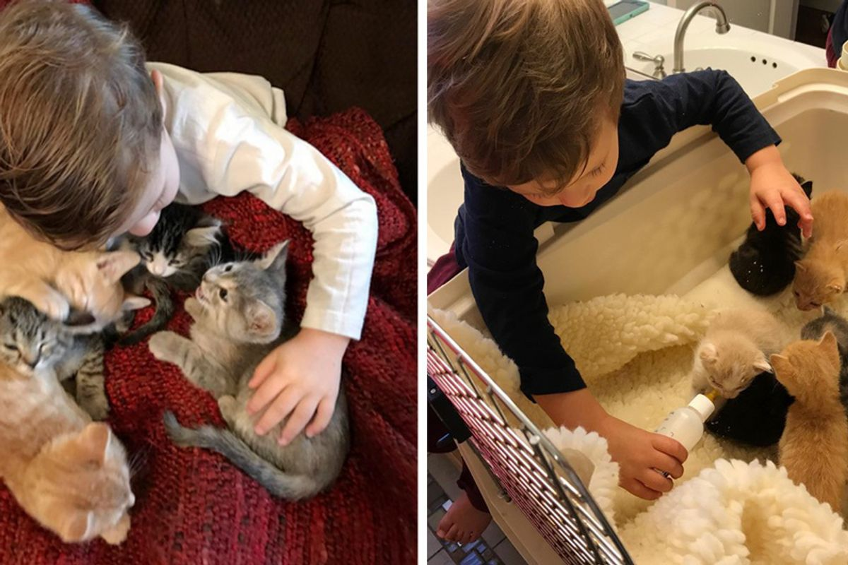 2-Year-Old Boy Loves Foster Kittens So Much He Becomes Most Dedicated Kitten-sitter