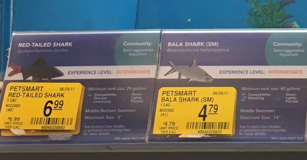legal to own a shark