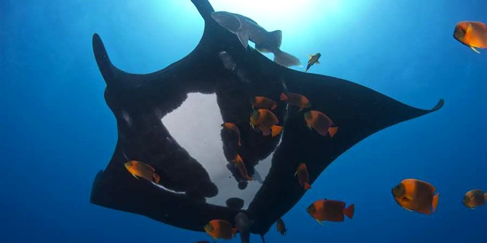 See the World's Newest Marine Park in the Pacific Ocean