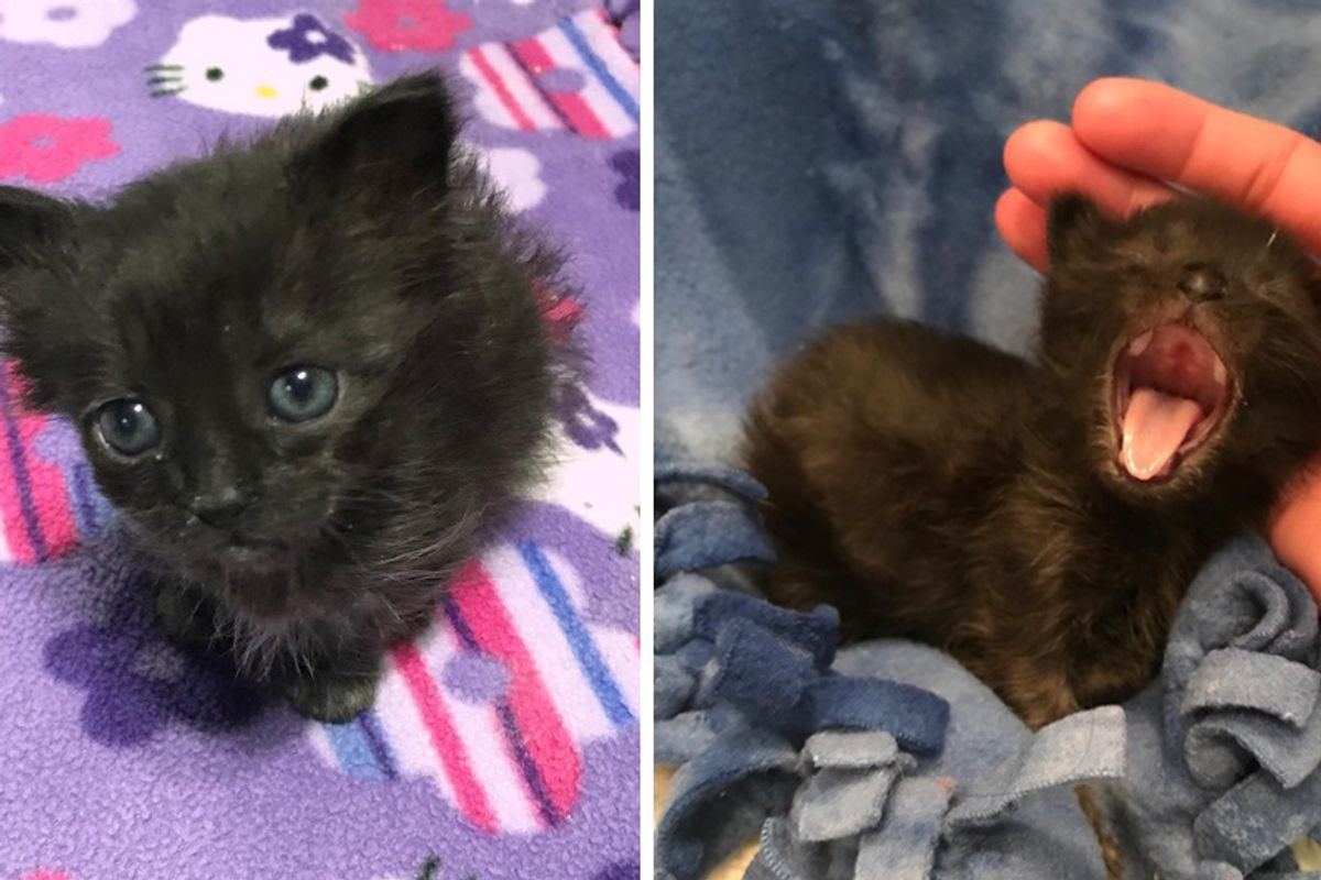 Kitten Half the Size of a Normal Cat Is Determined to Grow Big, Now 4 Months Later.
