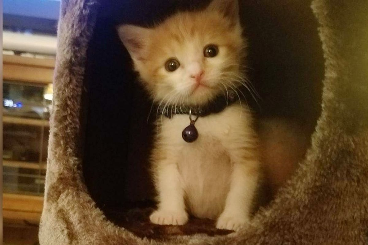 """They Brought In a """"Surprise"""" Kitten From the Streets - An Employee Offered to Be His New Mom"""