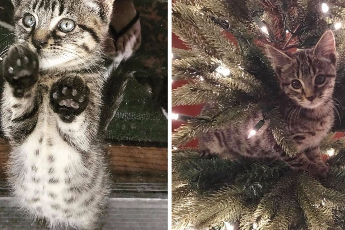 Kitten So Happy to Have Christmas Tree of His Own After Being Saved From Trash Can