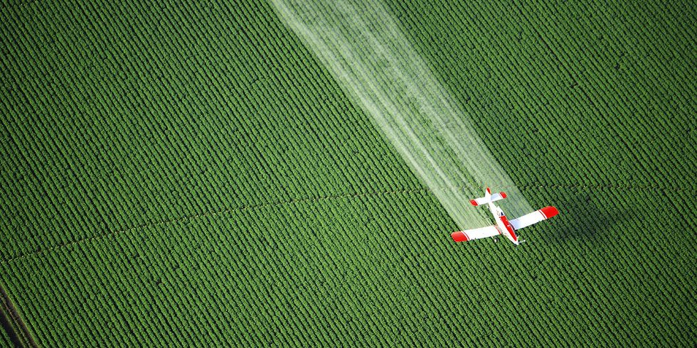 EPA Considers Allowing Bee-Killing Pesticide to Be Sprayed on 165 Million Acres of U.S. Farmland